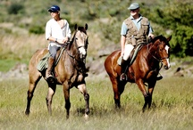 Horse Riding at Sosian / Horse riding is a wonderful way to see the bush and Sosian is one of the best places in Kenya to do this. The varied terrain makes it interesting riding, through rivers, along tracks and across more open country, where you can canter, jump and gallop.  We have 26 horses (including children's ponies), many of which are bred at Sosian. Riders must have considerable riding experience.  http://www.sosian.com/sosian-horseback-safaris/