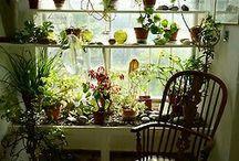 Crafts:Garden:Small gradening