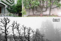 Espalierte trær og vekster