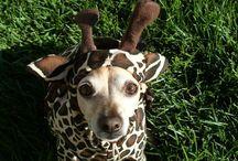 Fun Pet Costume