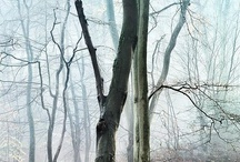 Trees and Forests / by Tony Eveling