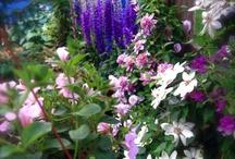 Gardening that I love