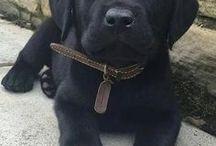 kutyák ♡♡