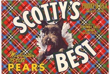A Scottie Collectibles / by Ronda