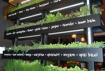 BLNK/záhrada