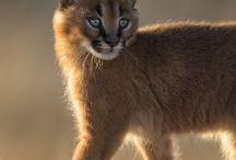 Photos of animals