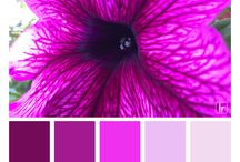 Color Craze / Crazy about color. Color palette created from beautiful photography.