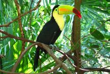 Costa Rica's fauna / Costa Rica's most majestious animals in their natural environment.