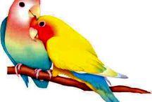 Lovebirds and small birds