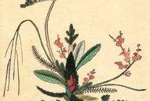 生け花 様式
