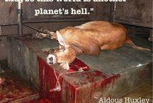 AGAINST ANIMAL VIOLENCE