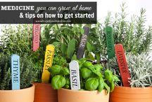 natural food&medicine