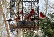 l amour en cage