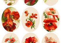 Poppies / Gorgeous red poppy flowers!