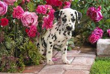 Dogs / Soo cute