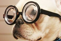 Puppies / by Katie 'Berens' Stotesbery