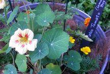 Edible Gardens / eating your way through your garden