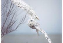 Bird 'Owl