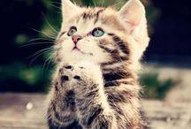Pisicutzee :3 / pisicutzee