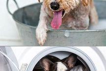 Brigitta / He wants a German Shepard -- I want to be prepared for dog ownership.