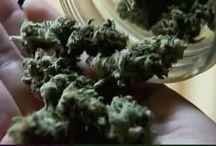 Salinas medical marijuana / Salinas medical marijuana