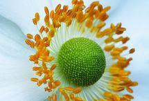 Flowers / by taka Cooper