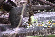 Wildlife Videos / Wild creatures being animals!