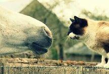 Zwierzaki :* / Zwierzątka i nic więcej ❤