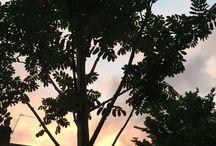 Sky Drama / Collection of sunsets, sunrise,birds,clouds - Skyline