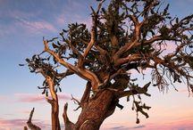 Drzewa - Trees
