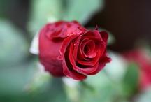 garden and flora photography