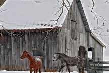 loving snow / by Roxanne Beise Walker
