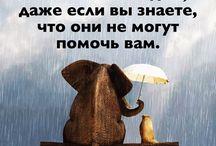 Жизнь и Мудрость