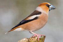 Het Grote Vogelweekend / Leer de vogels in jouw tuin herkennen met dit handige prikbord.