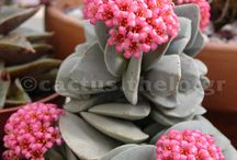 Scrumptious Succulents and Sweet Sedums