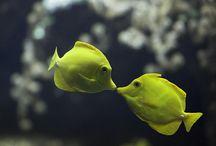 Fishies! :) / by Josie Fleetwood