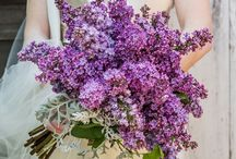 Lilac engagement