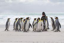 Falkland Islands / Falkland Islands with Terra Incognita Ecotours