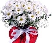 Yalova çiçek siparişi / Artık çiçek vitrini ile yalova çiçek siparişi çok kolay ve hızlı.! http://www.cicekvitrini.com/cicekler/yalova-cicek-siparisi