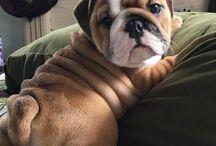 PUPPY DOG / CUCCIOLO CANE