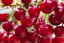 Frutíferas da área d lazer