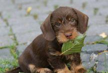Schattige puppy's / Cute little puppy's