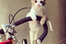 猫『毛玉』