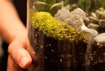 Terrific Terrariums and other plants