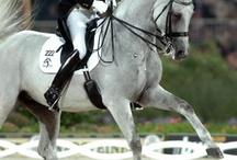 dressage / by melissa Anderson