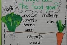 Farm to Fork I Teaching Ideas