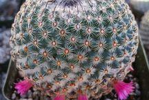 Cactus - Succulent - Air Plant