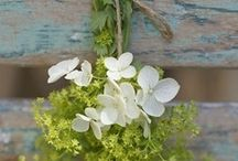 fleurs / by collette V. je Suis Charlie
