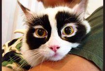 Kitties!!! / by Tabitha Weyandt