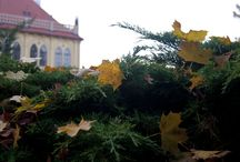Autumn | Podzim